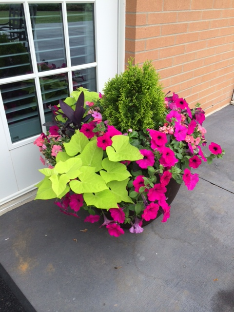 Delicieux D. Edwards Of The Sarah Polk Chapter Of The Tennessee Daughters Of The  American Revolution Made These Beautiful Plantings For The TN Fisher House  Patio. ...